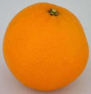 Sinaasappel Neddis 2015