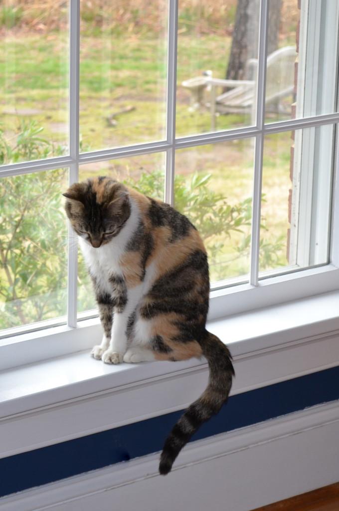 Dora isoleren kat