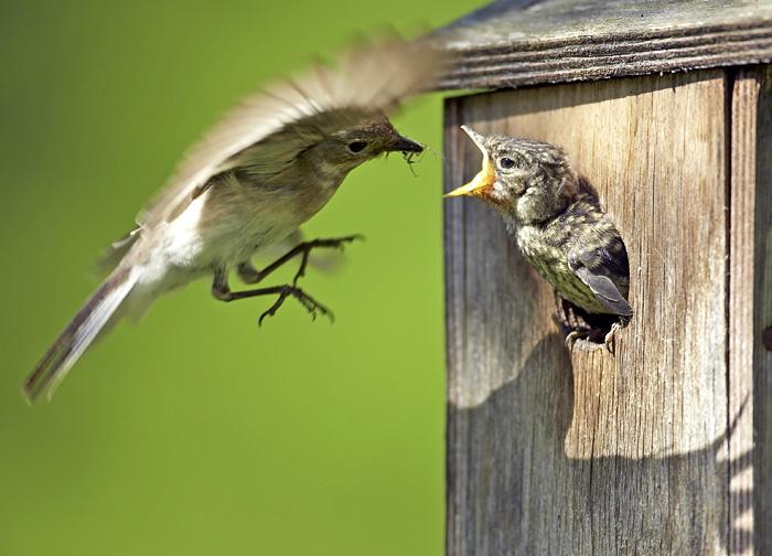 Dora vogeltjes