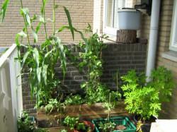 Groen en eetbaar balkon
