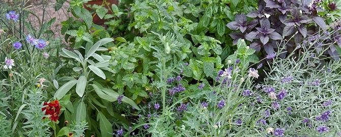 eetbare tuin geur