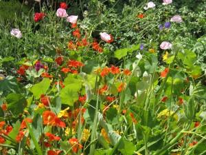 eetbare tuin kleur