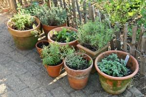 kruiden in je tuin
