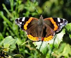 vlinders bij huis