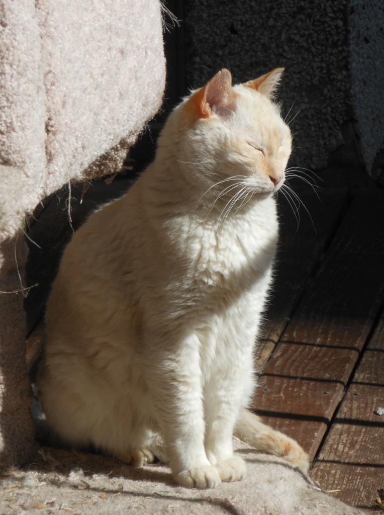 Dora in het zonnetje