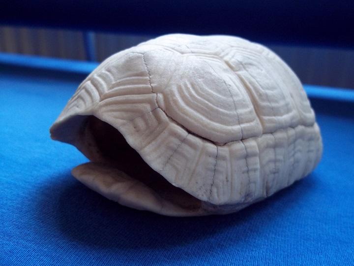 Dora huis schildpad