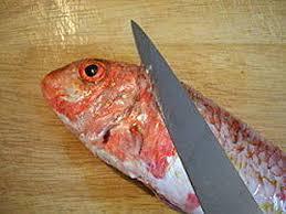 het fileren van vis