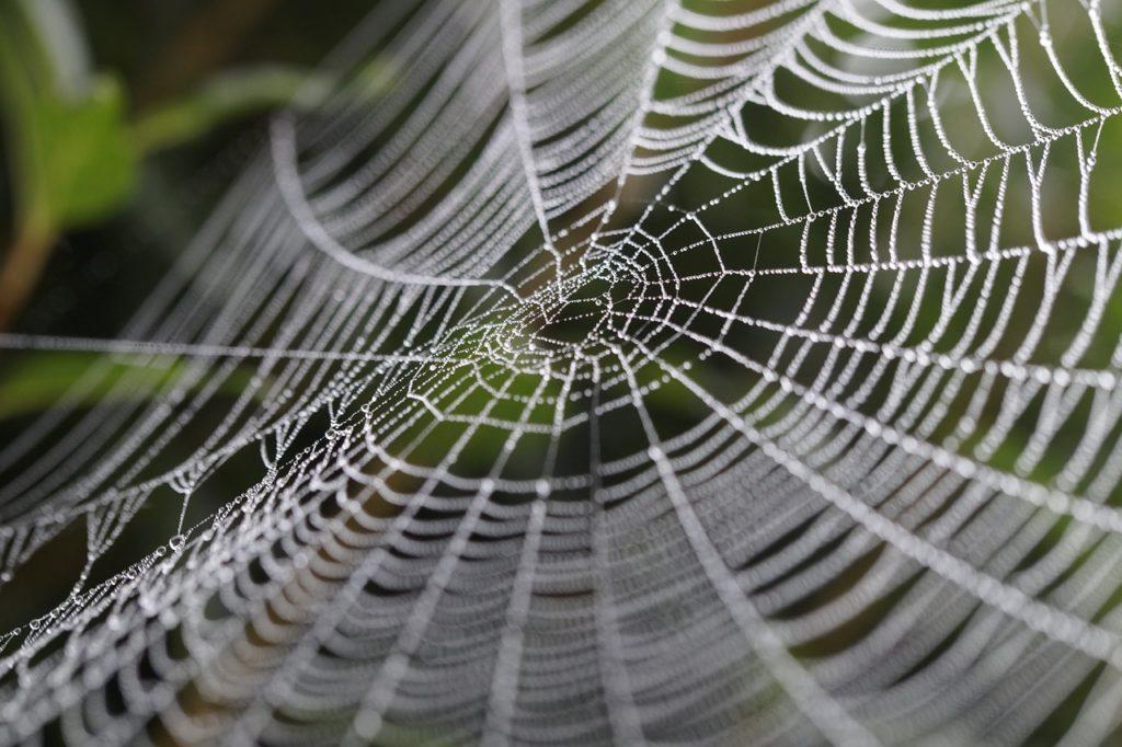 dora-spinnenweb