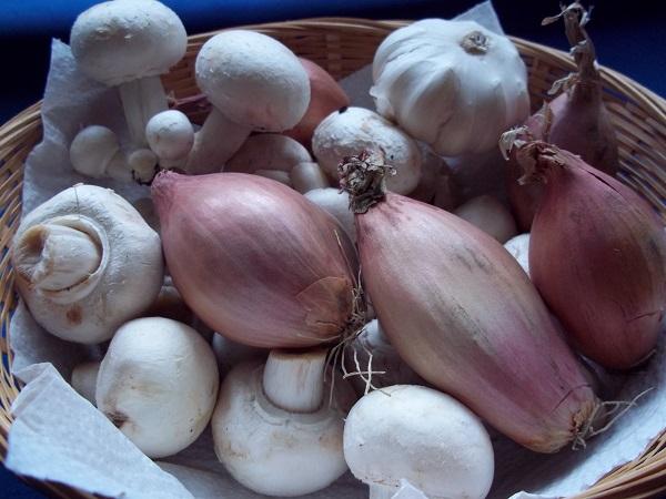dora-paddenstoelenhache-1