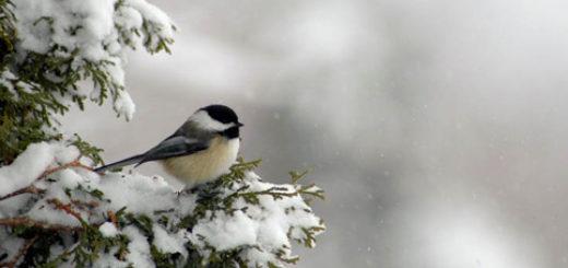 dora-wintervogels