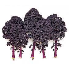 paarse-boerenkool