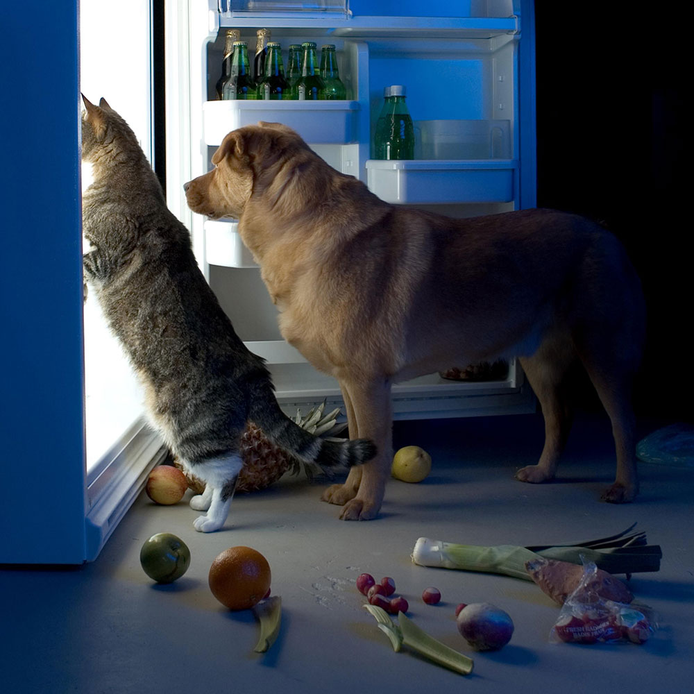 dora-dieren-koelkast