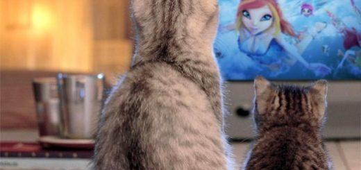 dora-video-katten