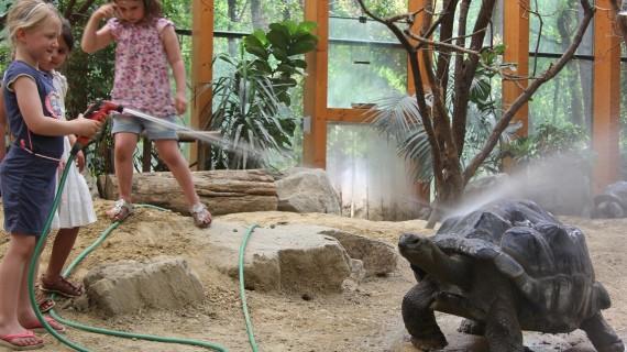schildpad-en-douche