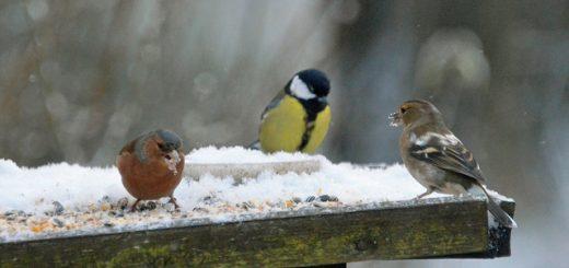dora-wintervogels-2